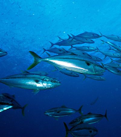 海を泳ぐ魚